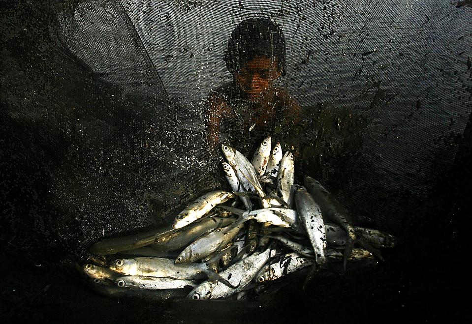 4) Мальчик собирает рыбу из пруда в провинции Сулавеси, Индонезия. (Yusuf Ahmad/Reuters)