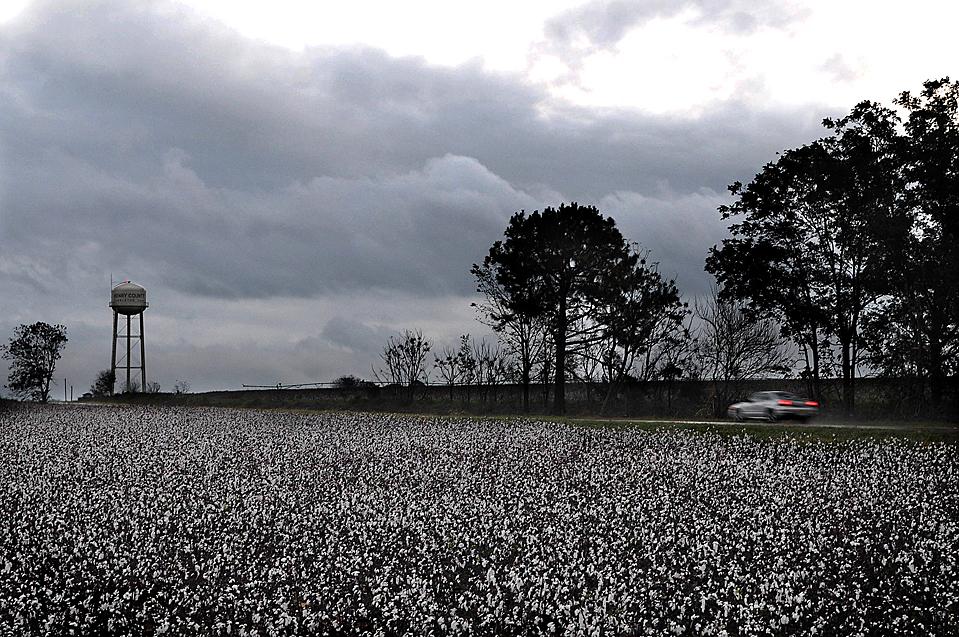 9) Автомобиль проезжает мимо мокрого от дождя поля хлопка в сельской местности округа Генри, штат Алабама. Ветер и дождь, причиной которого стал тропический шторм Ида, усугубили положение фермеров на юге США, которые уже столкнулись с проблемой задержки сезона сбора урожая. В Вирджинии губернатор штата Тимоти Кейн объявил чрезвычайное положение. (Jay Hare/The Dothan Eagle via Associated Press)