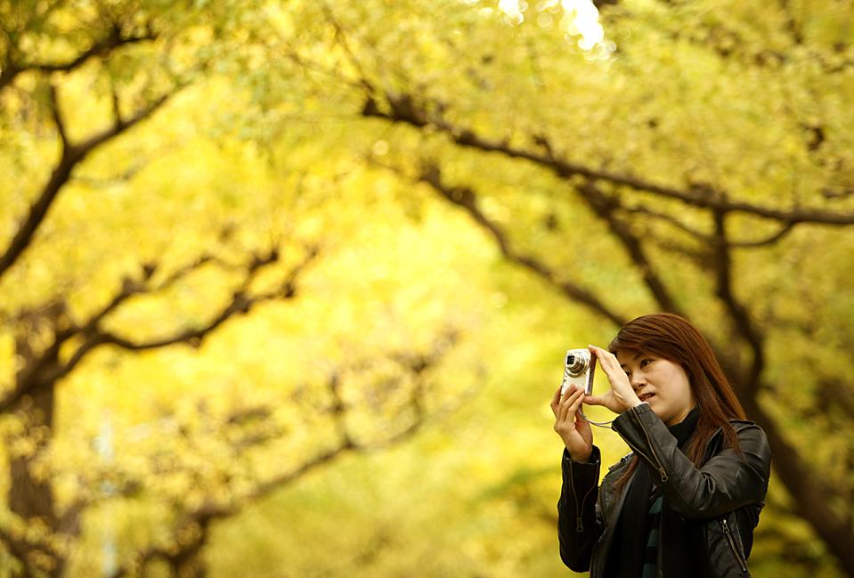 6) Женщина фотографирует, как падают листья с дерева гинкго билоба в Токио. (Yuriko Nakao/Reuters)