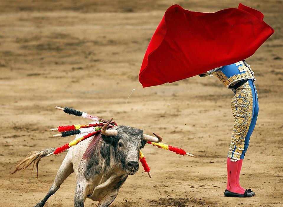 11) Испанский матадор Мигель Анхель Перера во время своего выступления на Пласа-де-Ахо в Лиме, Перу. (Enrique Castro-Mendivil/Reuters)