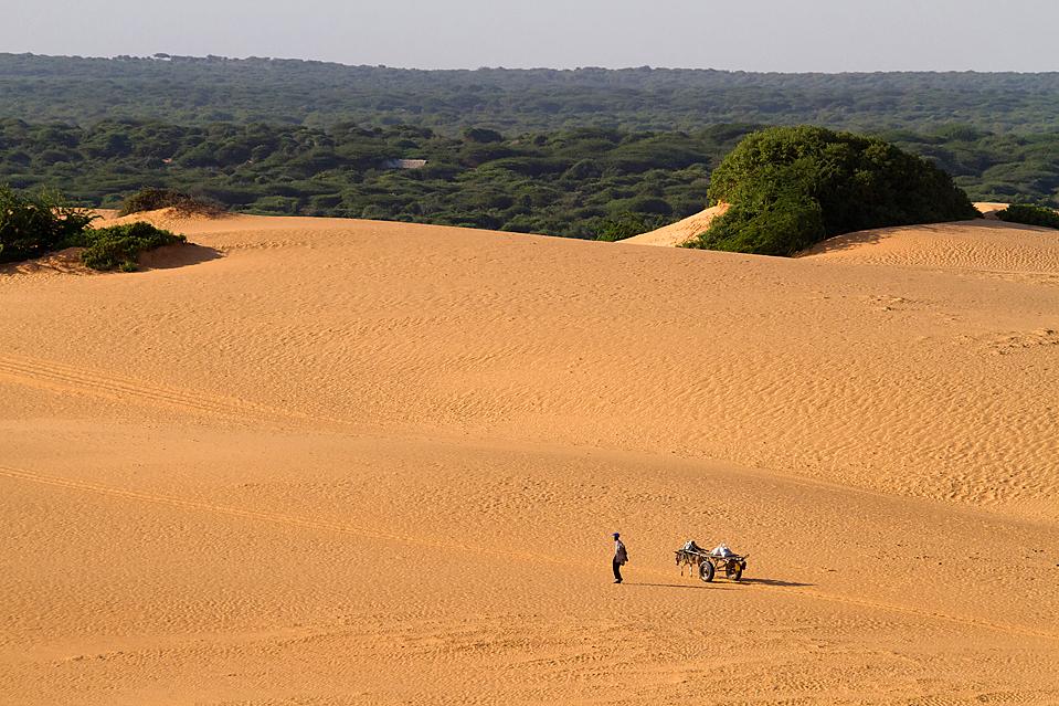 6) Человек с повозкой, запряженной ослами, идет через дюны недалеко от миссии Африканского союза в Могадишо, Сомали. Президент страны обратился к международному сообществу с призывом поддержать его временное правительство в борьбе с боевиками. (Yasuyoshi Chiba/Agence France-Presse/Getty Images)