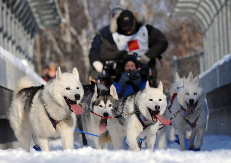 Собачьи гонки Идитарод