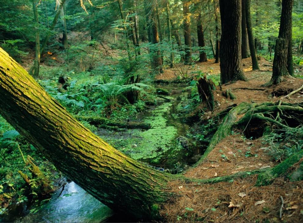 13. Небольшой аппалачский ручеек течет через хвойный лес Пенсильвании в Национальном парке штата. Когда-то на этом безмятежном месте был завод по производству железных печей. (Sam Abell)