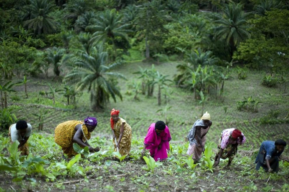 13. Эти крестьяне в западной Уганде живут на воду от ледников на вершине горы Рвензори, однако, как и многие ледники по всему миру, этот также начинает резко сокращаться. (Walter Astrada / AFP - Getty Images)