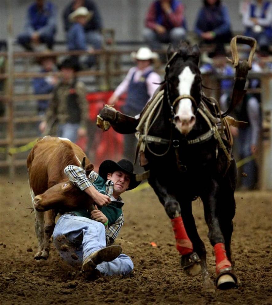 14. Кейси Грир из университета Арканзас в Монтичелло взял быка за рога, спрыгнув с лошади на родео в Государственном университете родео Мюррея. (Neil Blake/2009 Mountain Workshops)