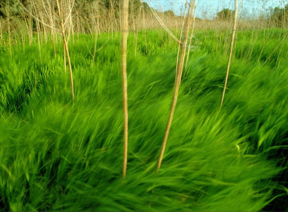 14. Сочная зеленая трава колышется на ветру. Различные типы пастбищ когда-то покрывали почти половину территории США, но сегодня их можно найти только на таких кусочках земли. (Raymond Gehman)