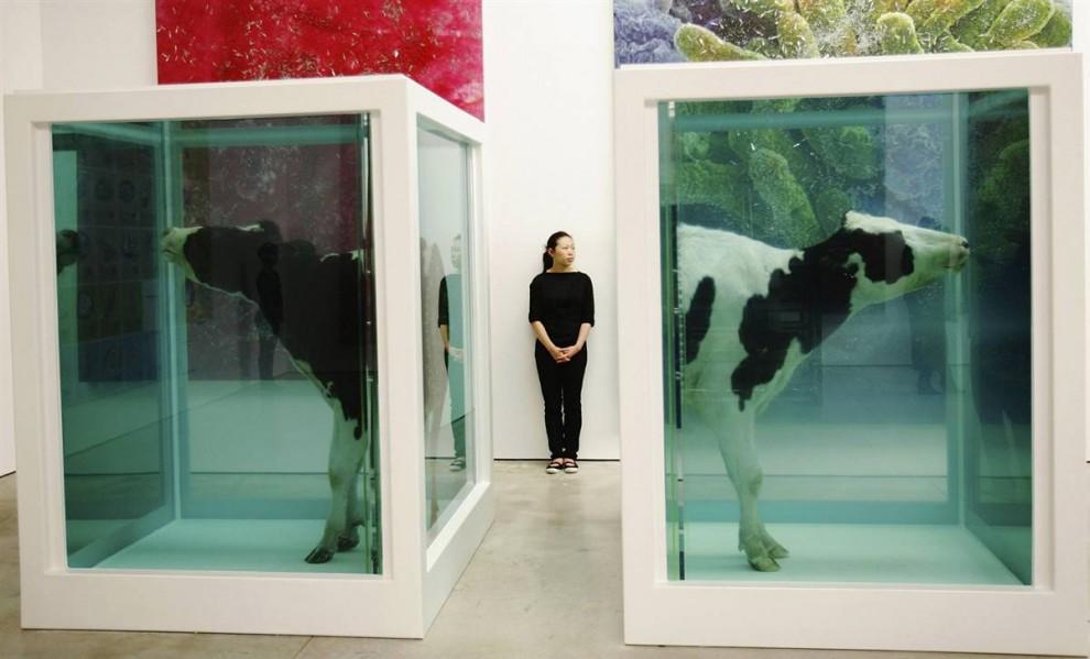 14. «Парадокс любви» Дамиена Хирста является частью инсталляции «За пределами вероятности», которая включает в себя мертвых животных. На этом снимке вы видите расчлененных и сохраненных в формальдегиде коров. Выставка охватывает темы существования, включая любовь и бессмертие. (Daniel Berehulak/Getty Images)