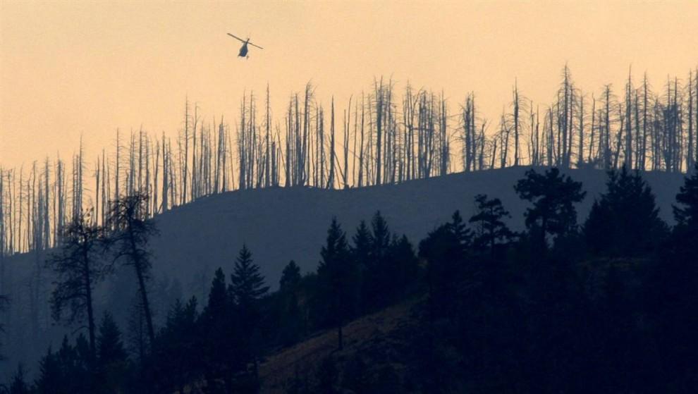 21. Жуки и пожары резко сокращают западные леса, подобно этому в Канаде. Ученые говорят, что в будущем сжигание лесов может только усугубить ситуацию с потеплением. (Darryl Dyck / AP)