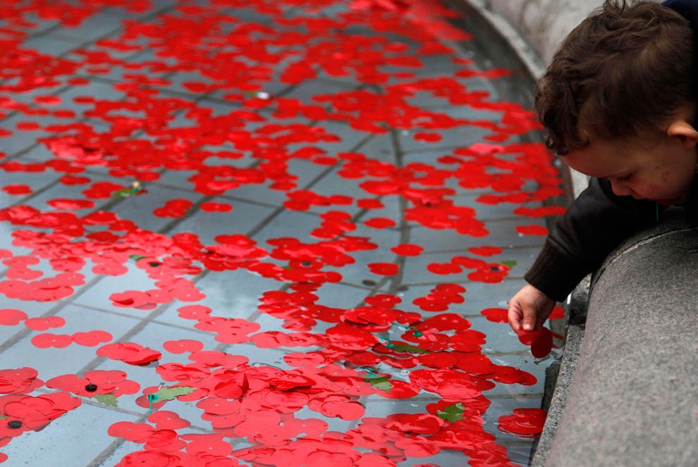 28. Мальчик достает из фонтана мак на Трафальгарской площади во время церемонии в честь Дня Памяти в центральном Лондоне 11 ноября 2009 года. (REUTERS/Stefan Wermuth)