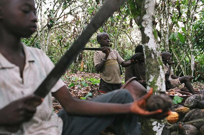 1. Мальчики раскалывают плоды шоколадного дерева во время сбора какао на ферме в Кот-д'Ивуар в феврале 2007 года. (Jessica Dimmock / VII Network)
