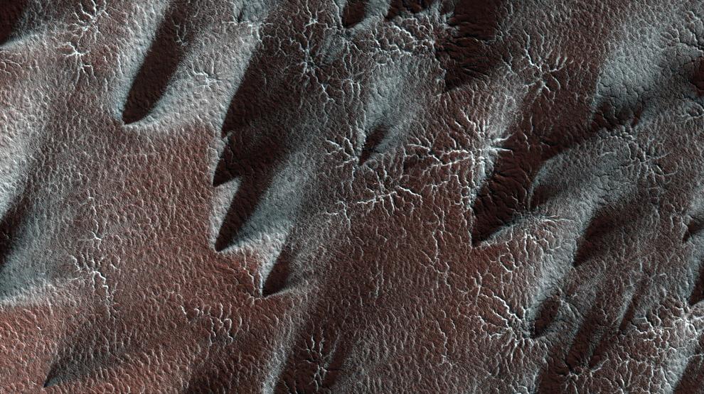 16. Южный полярный регион Марса каждый год покрывается слоем сухого льда. В регионе, называемом «тайная местность», лед прозрачный, и солнечный свет может проникать через него и нагревать поверхность под ним. Слой льда испаряется со дна. Темные полосы пыли на этом снимке берут свое начало с поверхности, находящейся под слоем льда, и наверх попадают с помощью газа. Прозрачный лед можно «увидеть» благодаря эффекту, который он оказывает на оттенок поверхности внизу. В противном случае она имела бы тот же цвет и отражение, что и полосы. Яркие полоски на этом снимке представляют собой свежий иней. (NASA/JPL/University of Arizona)