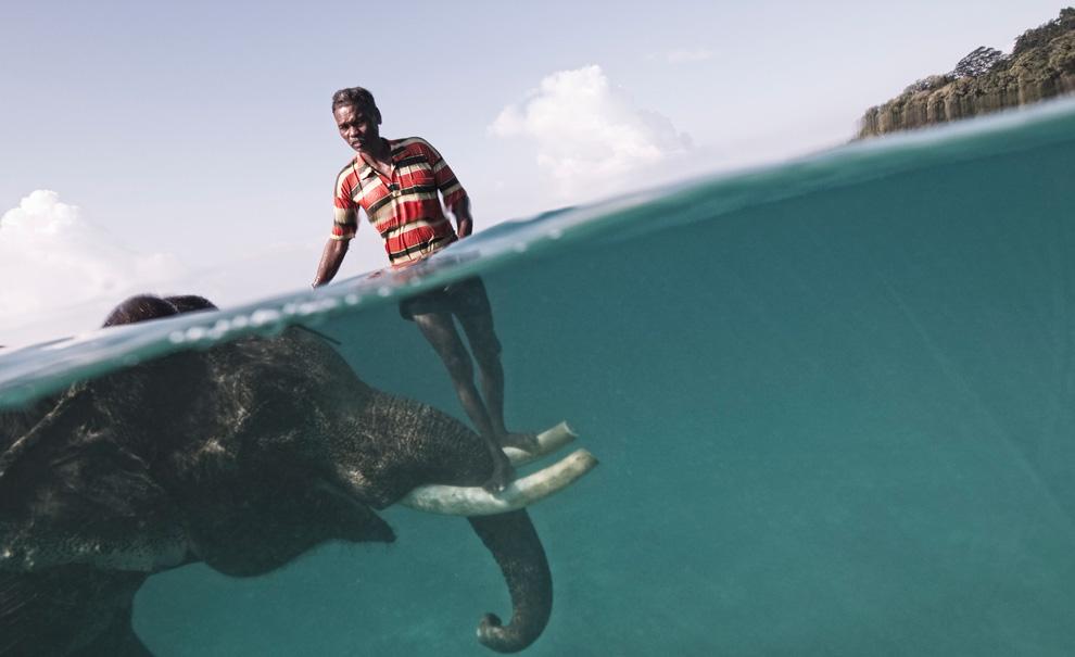 1. Погонщик слонов (махаут) Назру привел своего любимца Раджана купаться – на этом фото он позирует на фоне пляжа Радха Нагар в Хэвлоке, Андаманские острова. Раджан – один из нескольких слонов в Хэвлоке, которые умеют плавать. В свободное от таскания дерева время он развлекает туристов. Обычно отношения махаутов и слонов длятся всю жизнь, создавая невероятно крепкие узы между животным и человеком. (Photo and caption by Cesare Naldi)