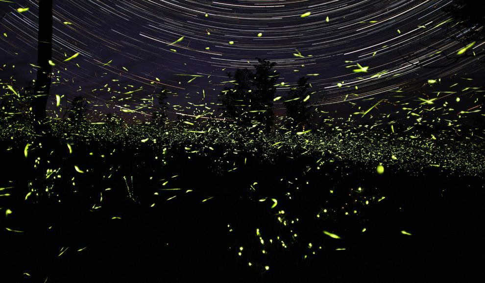 13. Эти светлячки кружили вокруг моего дома в Онтарио почти час. Точность звездного следа на заднем фоне представляет отличный контраст хаотичному узору светлячков. (Photo and caption by Steve Irvine)