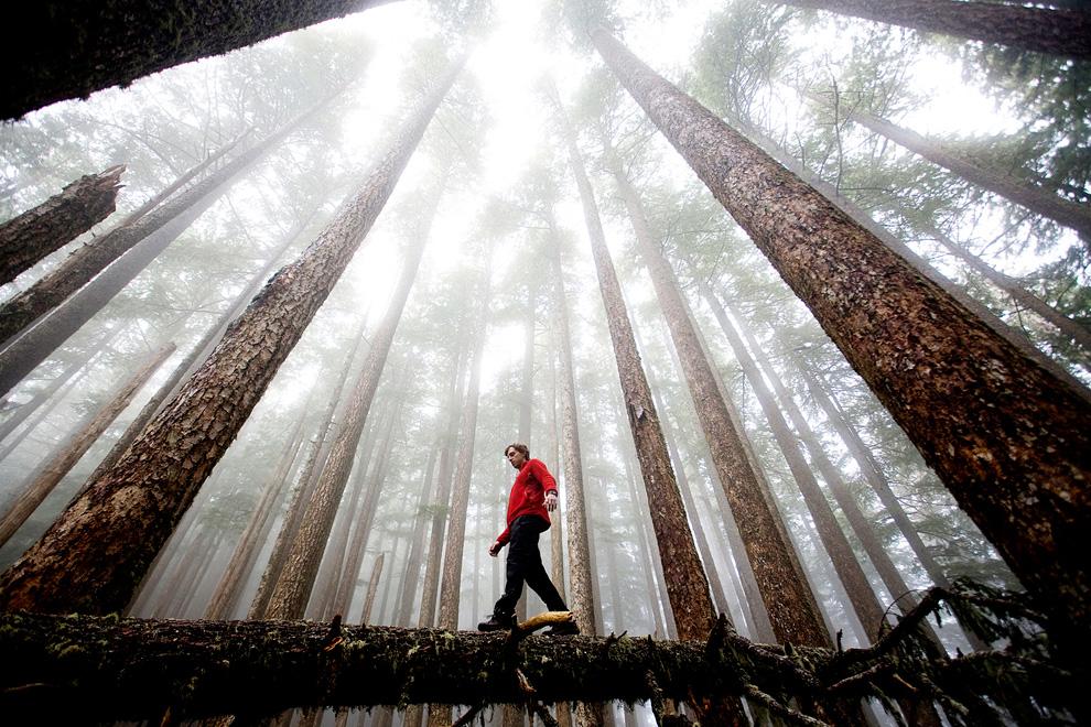 19. Дэвид Хэнсон идет по упавшему бревну под возвышающими в небо деревьями и нависшим туманом в Национальном парке Вашингтона Олимпик. (Photo and caption by Michael Hanson)