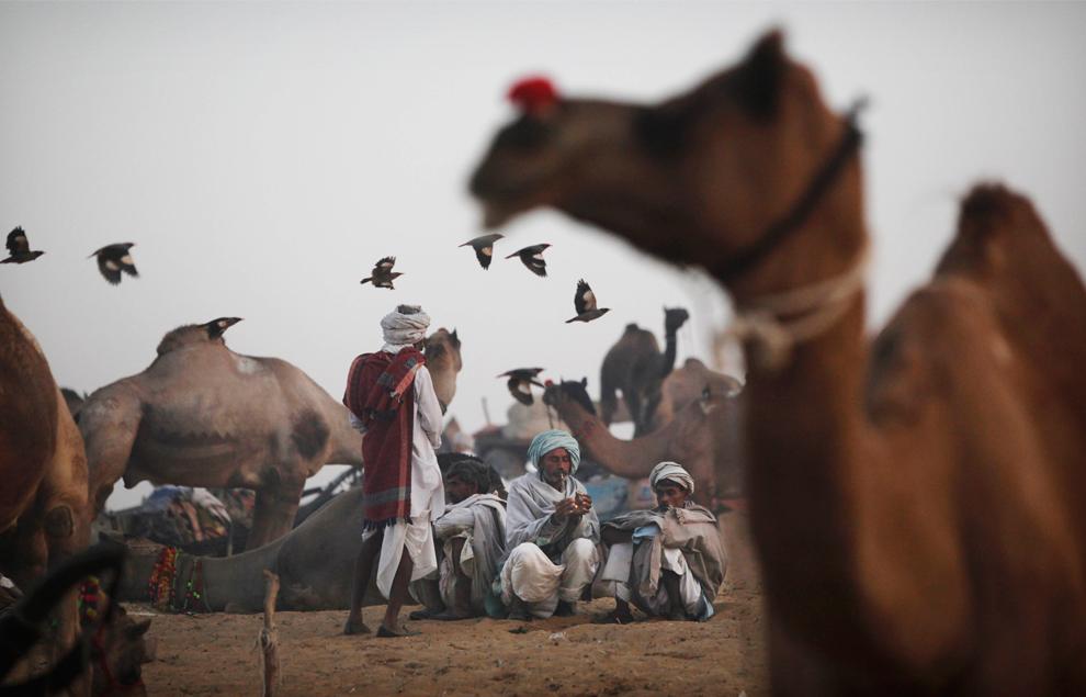 6. Погонщики верблюдов рядом со своими питомцами в Пушкаре утром в четверг 29 октября 2009 года. (AP Photo/Kevin Frayer)