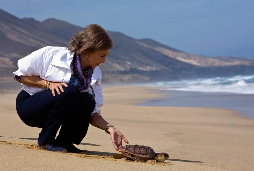 3. Королева Испании София отпускает морскую черепаху в море на пляже Кофете к югу от испанского Канарского острова Фуэртевентура 18 сентября 2009 года. Проект по сохранению морских черепах направлен на то, чтобы возродить этот вид на Канарских островах, откуда он исчез 300 лет назад. (REUTERS/Borja Suarez)