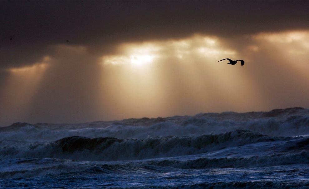 20. Чайка летит вдоль побережья Алабамы на восходе солнца 10 ноября 2009 года, когда до берегов Галф Шорса, штат Алабама, добрался тропический шторм Ида. (AP Photo/Dave Martin)
