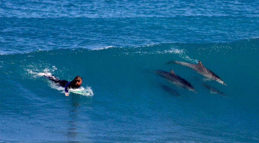 33. Серфер Эндрю Брукс с удивлением смотрит на свою компанию на волне в Кейп Адье в 160 километрах к западу от Седуны, Австралия 15 сентября 2009 года. Как только Эндрю собирался оседлать волну, он увидел двух дельфинов. Фотограф-любитель Брукс установил камеру на берегу на треноге и попросил кузена сфотографировать его, когда к нему присоединились эти дельфины. (AP Photo/Andrew Brooks)