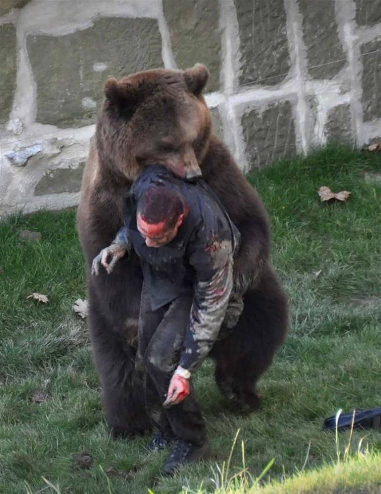 6) Человек висит в пасти медведя, который готов разорвать свою жертву на части. Однако полиция прибыла вовремя, и успела остановить медведя выстрелом в грудь и спасти жизнь человека. Фотография была сделана посетителем медвежьего парка Берн в Швейцарии, в выходные дни. Мужчина, который как сообщается, является умственно отсталым, прыгнул в вольер к 4-х летнему медведю. В результате инцидента он отделался серьезной травмой головы и травмами ног. (Damien Trachsler/Zuma Press)