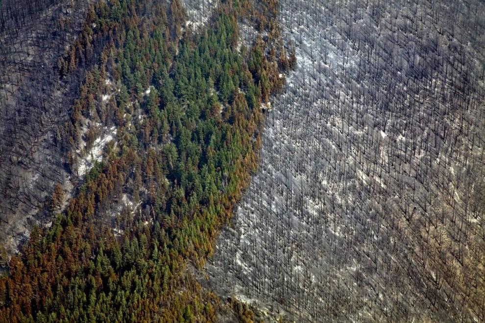 1. На примере этого леса недалеко от озера Келли в округе Карибу Британской Колумбии, Канада, можно наблюдать пагубное влияние и того и другого: зараженные жуками деревья окружают здоровые зеленые деревья в то время как по бокам можно видеть остатки леса  после пожаров. (Nina Berman / Consequences by NOOR)