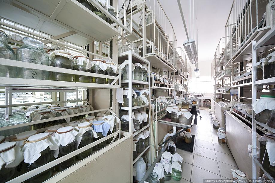 """1) Сегодня мы расскажем вам про Международный центр медицинской пиявки, созданного на базе образованного в 1937 г. объединения """"Медпиявка"""", которое занималось содержанием пиявок в искусственных прудах дачного поселка Удельная (Московская область)."""