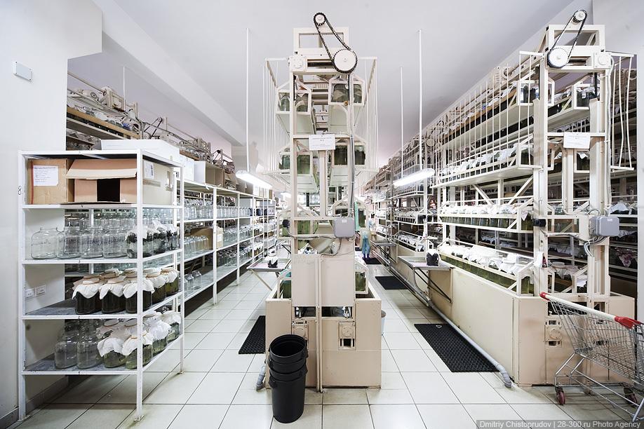 2) На 2500 кв. м. размещаются производственные помещения для выращивания более 3 500 000 медицинских пиявок и производства косметической продукции.