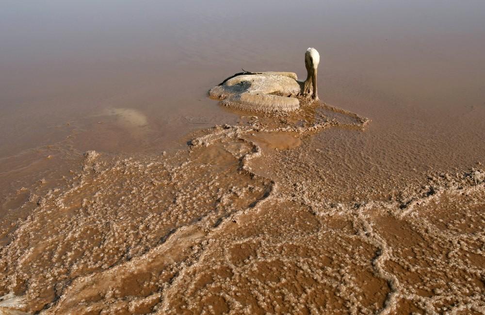 2) Мертвый аист в соли на юго-западном берегу Мертвого моря 16 декабря 2008 года. Мертвое море высыхает медленно, но верно, и уже через 50 лет может исчезнуть совсем, если ничего не предпринять. Уровень воды понижается на один метр каждый год из-за резкого снижения притока из Иордании и других рек, чьи воды теперь используются для орошения полей. (DEADSEA-WONDER REUTERS/Baz Ratner)