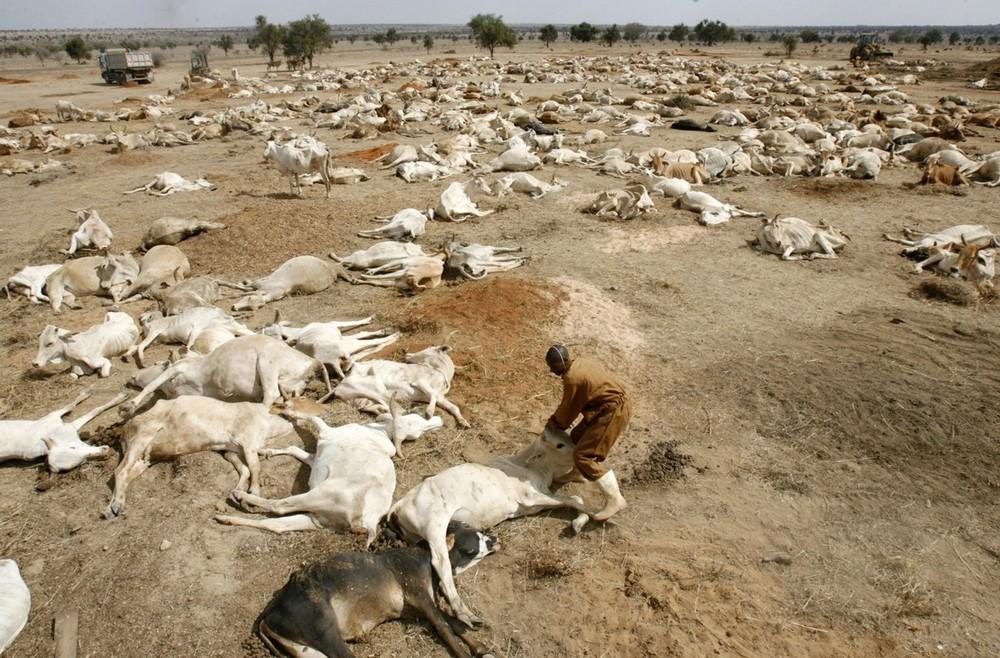 3) Рабочий пытается поднять ослабевшую корову, лежащую среди мертвых тел погибших от засухи коров на выгоне на Кенийском мясокомбинате недалеко от реки Ати в 50 км к востоку от столицы Найроби 16 сентября 2009 года. Фермеры пытаются продать своих погибших от засухи коров на мясо, чтобы хоть как-то сократить свои убытки. (REUTERS/Thomas Mukoya)