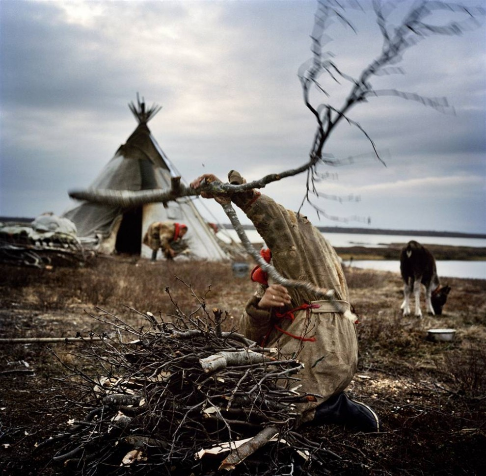 3. Ненцы собирают дрова для костра на стоянке. Полуостров находится в 2011 км к северо-востоку от Москвы, а ненцы мигрируют с севера на юг на расстояния до 160 км каждый год. Они проводят всего несколько дней на одном месте и живут за счет оленей и рыбы. (Yuri Kozyrev / Consequences by NOOR)