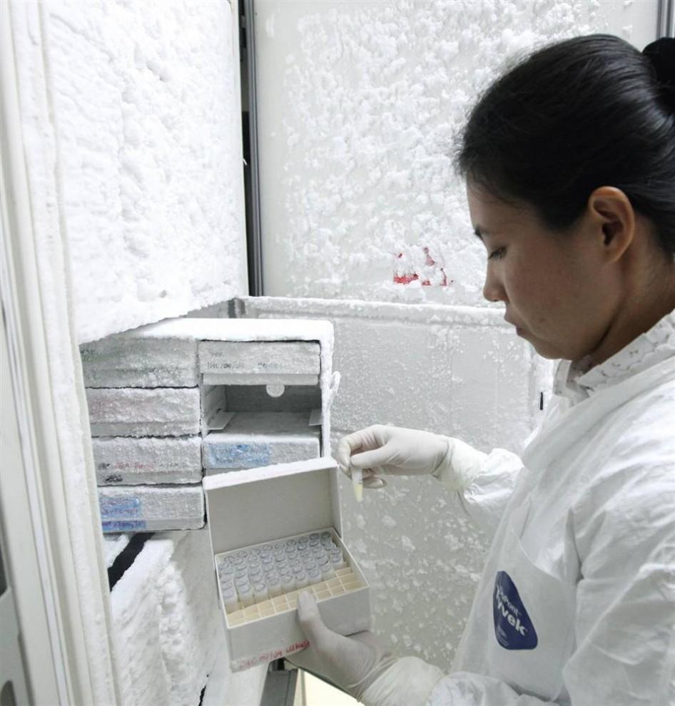5. Тайский техник демонстрирует образцы крови более 16 000 человек, попробовавших на себе вакцину против СПИДа, в холодильнике лаборатории НИИ вооруженных сил в Бангкоке. Представители Минздрава Таиланда заявили о первом эффективном тестировании вакцины против СПИДа на 16 000 добровольцев, однако уровень эффективности – 31,2% - слишком незначителен для распространения вакцины. (Narong Sangnak / EPA)