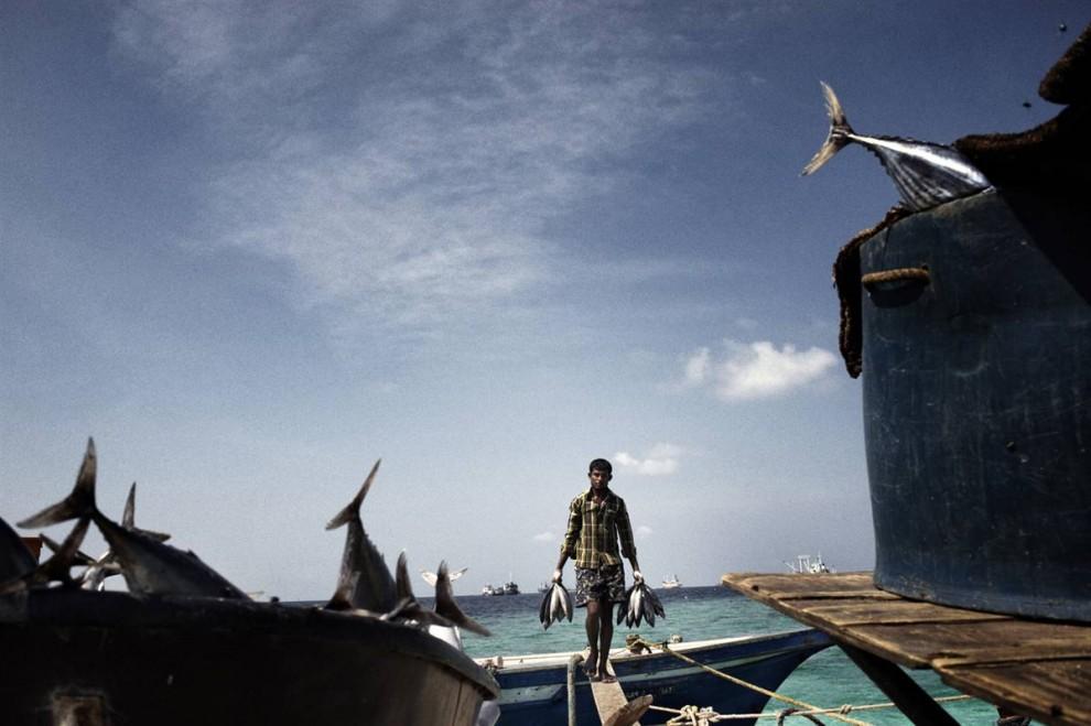 6. Повышение уровня моря – не единственная проблема в стране. Моря окисляются из-за выброса углекислоты, и это негативно влияет на рыболовство и коралловые рифы, от которых зависят сотни видов рыб. Рыболовное хозяйство составляет 20% внутривалового продукта Мальдив и предоставляет около 22 000 рабочих мест. (Francesco Zizola/Consequences by NOOR)
