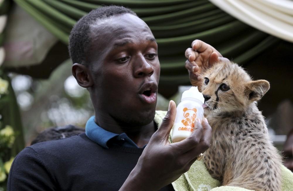 9. Олимпийский и мировой чемпион бегу Усейн Болт из Ямайки кормит трехмесячного детеныша гепарда в Кенийском центре дикой природы в столице Кении Найроби 2 ноября 2009 года. Болт приютил гепарда по кличке Молния во время запуска программы «усыновления» животных в приюте для животных в Найроби. (REUTERS/Thomas Mukoya)