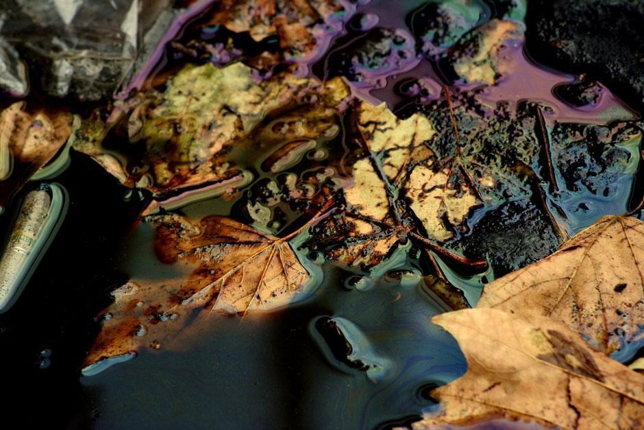 """1) В теме """"Осень"""" победу одержал Яном Брайс, очаровавший цветами. Сочетание масла и осенней листвы на удивление хороши."""