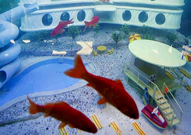 """10) Первый отель рыб открылся в Амстердаме. Отель позволяет присматривать за вашей рыбкой когда вы уходите на праздник, в нем имеется """"теннисный корт"""" и """"бассейн"""". (BUZZ NEWS AGENCY)"""