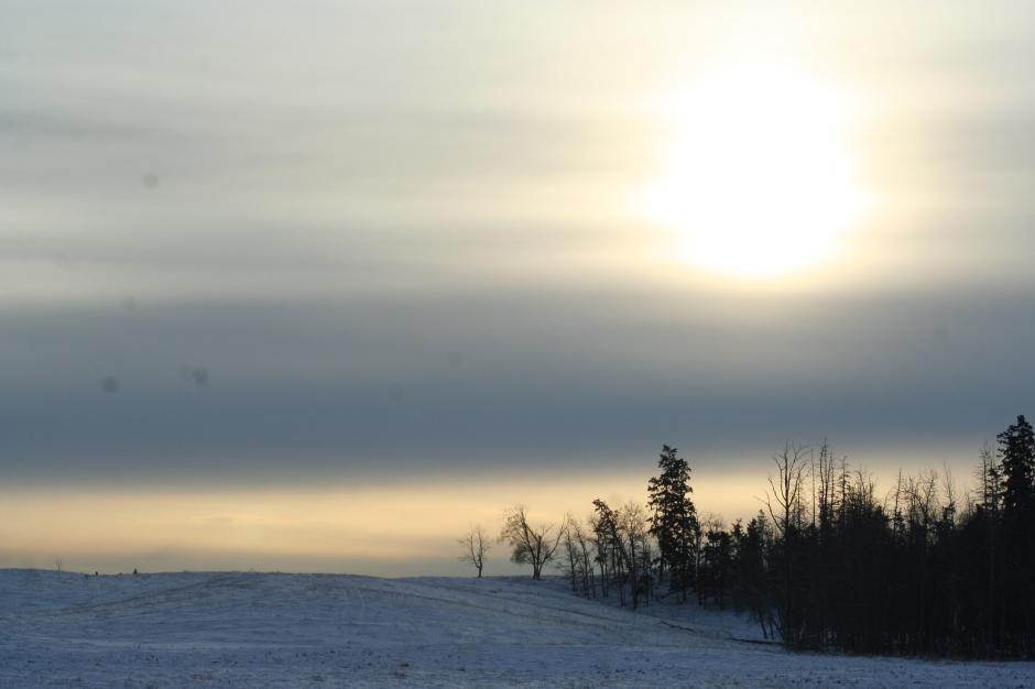 12. Ельник в Альберте (к западу от Эдмонтона) 12 декабря 2009 года.