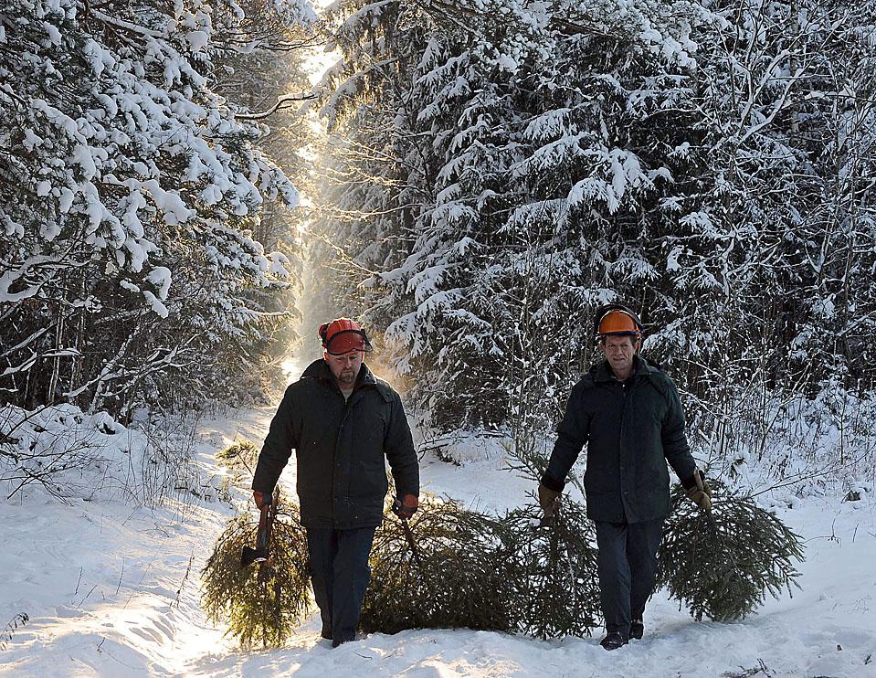 5) Рабочие несут елки недалеко от белорусского города Узда. (Viktor Drachev/Agence France-Presse/Getty Images)