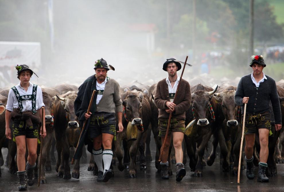 13) Фермеры со своим скотом возвращаются с гор, где они провели лето. (Miguel Villagran/Getty Images News/ fotobank.ua / 11 сентября 2009/ Германия)