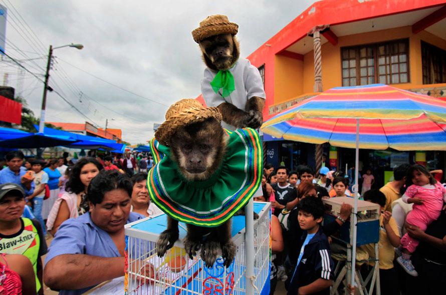 13. Две обезьянки в костюмах выступают на праздновании Дня Девы Марии в Котоке, Боливия. (AP Photo/Jorge Saenz)