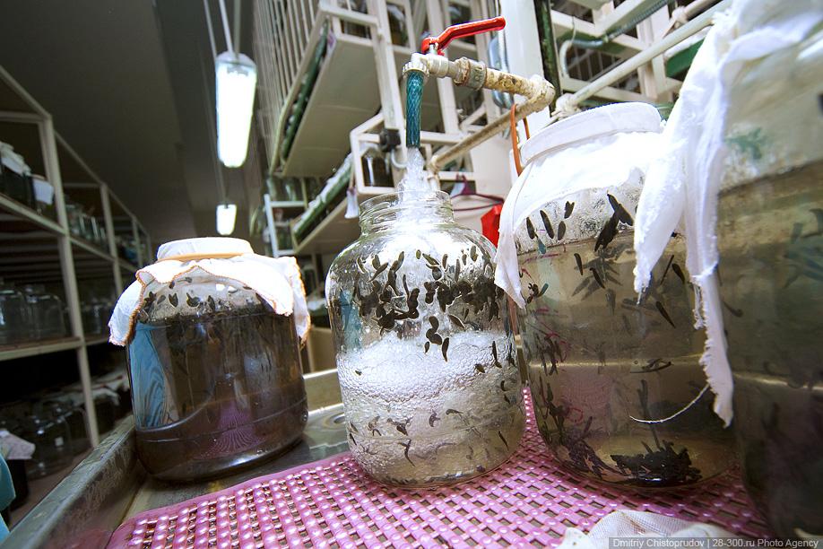 12) Укусила пиявка - как крапива ужалила. Укус того же слепня или муравья гораздо болезненней. В слюне пиявки содержатся обезболивающие вещества (аналгетики). Питается пиявка исключительно кровью. Гематофаг, то есть, вампир.