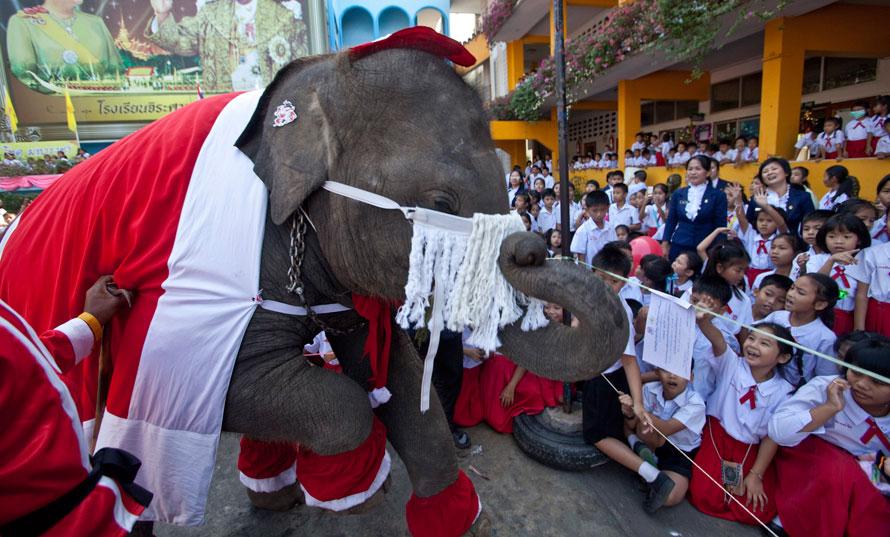 13. Тайские школьники в Аюттае, Таиланд, общаются со слоном в костюме Санта Клауса, который раздает им игрушки. Эта традиция существует в школе Джирасаривитайя вот уже, по меньшей мере, пять лет. Почти все ученики школы – буддисты. (AP Photo/David Longstreath)