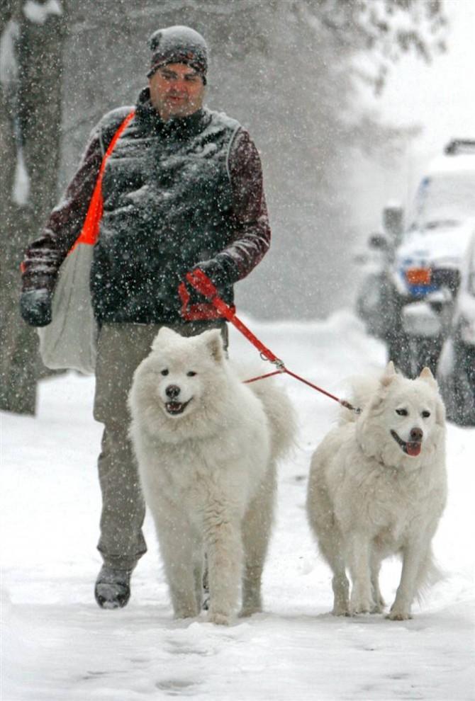 12. Чарли Городон выгуливает собак Флерри и Мисти во время метели в Монпелье, штат Вермонт. Гордон, работающий учителем, помогал своей дочери разносить газеты, так как из-за снегопада у него на работе объявили выходной. (Toby Talbot / AP)