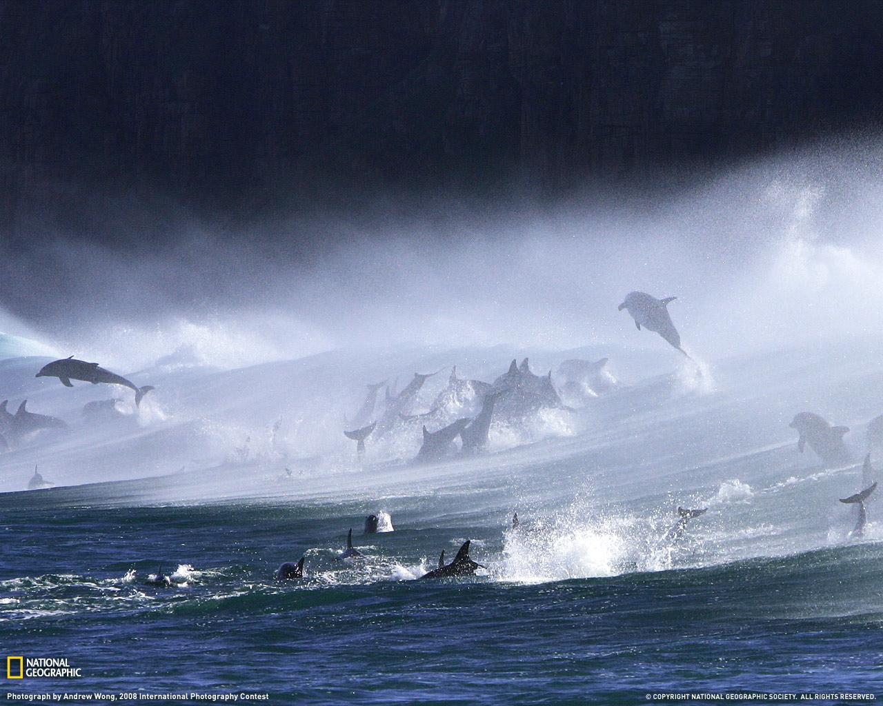 15) Резвящиеся на волнах дельфины.