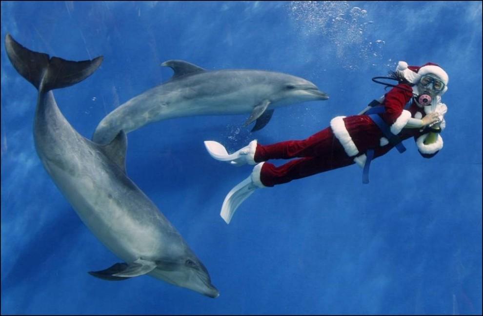 7) Дайвер в костюме Санты с дельфинами в Иокогаме, Япония. (Yuriko Nakao/Reuters)