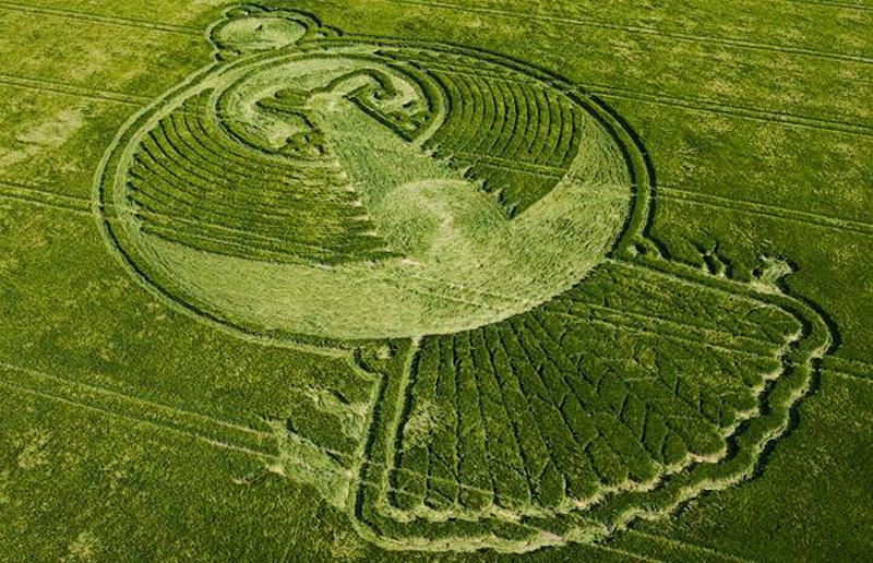 19) 400 футовые круги на ячменных полях недалеко от Йотесбари Девисайз (Yatesbury Devizes). (M & Y PORTSMOUTH)