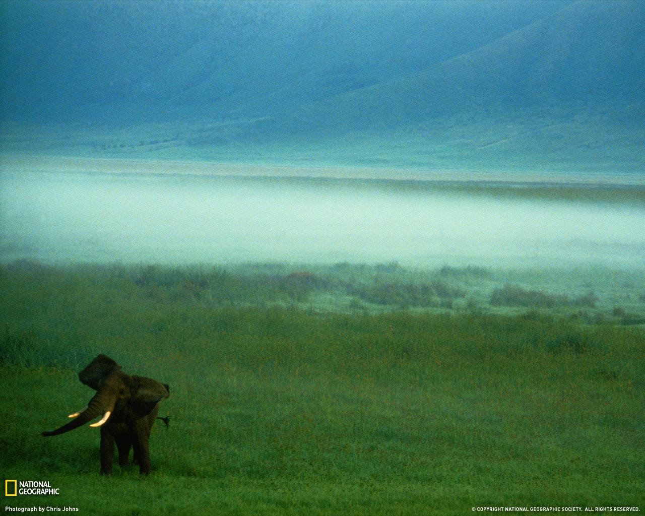 22) Африканский слон в Танзании.