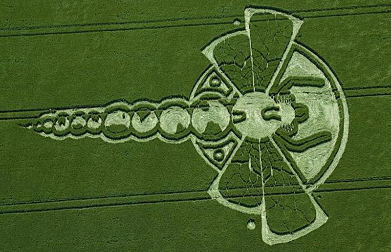 22) 150 футовые в длину стрекозообразные круги в ячменном поле в Йотесбари (Yatesbury), Уилтшир. (M + Y PORTSMOUTH)