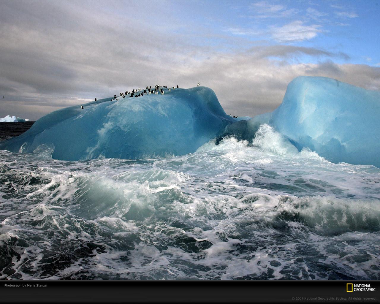23) Антарктические пингвины.