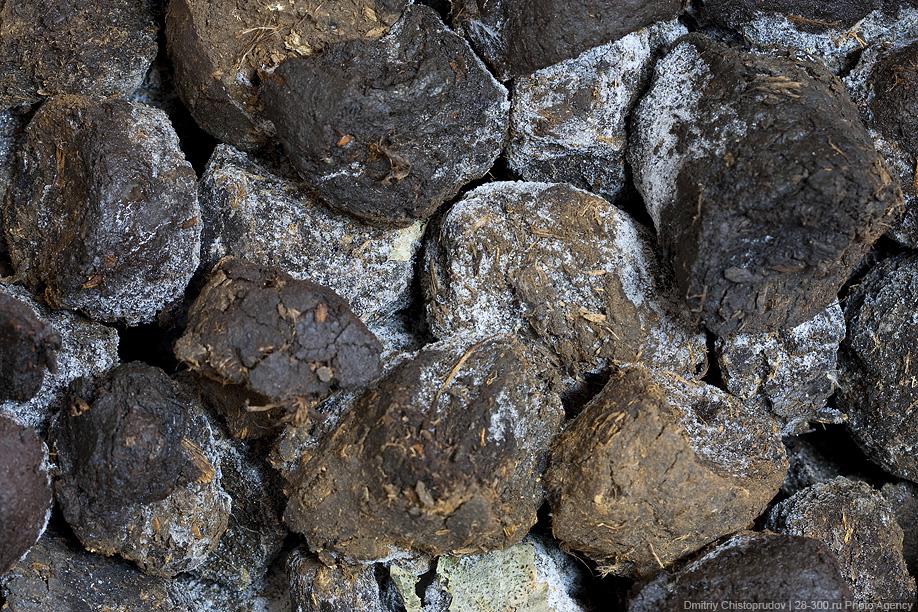 33) Брачный период, во время которого происходит спаривание, занимает по времени около 1 месяца, после чего пиявок рассаживают по маточникам - трехлитровым банкам. На дно маточника кладется влажная торфяная почва, представляющая благоприятную среду для медицинских пиявок и их коконов. Поверх торфа выстилаются мягкие моховые дернинки, регулирующие влажность почвы. Матки свободно передвигаются по мху, в котором чувствуют себя комфортно, и постепенно закапываются в торф.