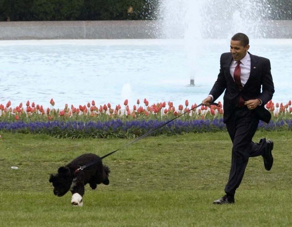 10) Президент США Барак Обама представляет щенка первой семьи Америки – португальскую водяную собаку по кличке Бо. Снимок сделан на южном газоне Белого Дома в Вашингтоне 14 апреля 2009 года. (REUTERS/Larry Downing)