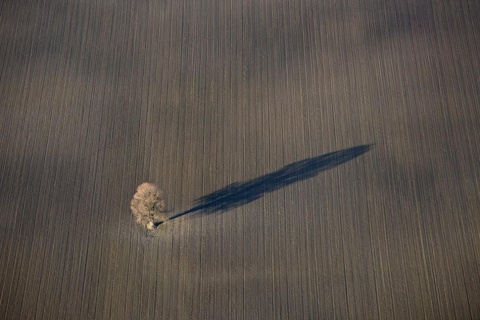 23. Вид с воздуха на одинокое лиственное дерево в поле, отбрасывающее длинную тень.